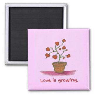 La planta del amor, amor está creciendo el imán