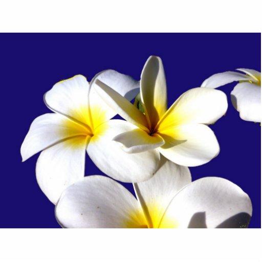 la planta del ti florece back.jpg azul blanco amar fotoescultura vertical