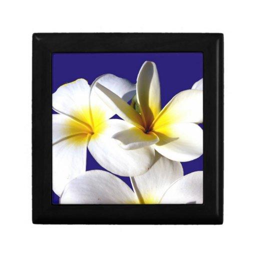 la planta del ti florece back.jpg azul blanco amar caja de recuerdo