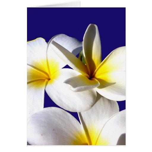 la planta del ti florece back.jpg azul blanco amar tarjetas