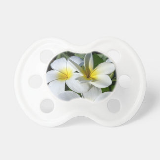 la planta del ti florece blanco amarillo chupete