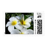 la planta del ti florece blanco amarillo envio