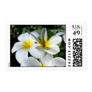 la planta del ti florece blanco amarillo sellos