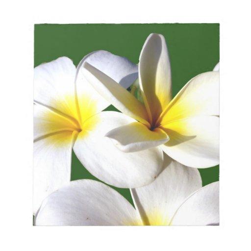 la planta del ti florece la parte posterior blanca bloc de notas