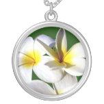 la planta del ti florece la parte posterior blanca pendiente