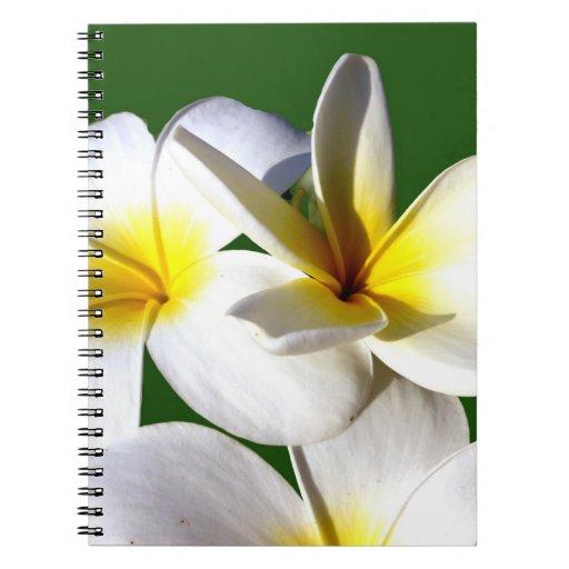 la planta del ti florece la parte posterior blanca libro de apuntes con espiral