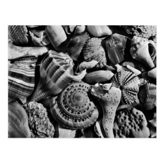 La playa blanco y negro descasca la postal