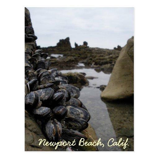 La playa de Newport Muscles durante la bajamar Postal