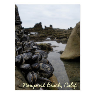 La playa de Newport Muscles durante la bajamar Tarjetas Postales