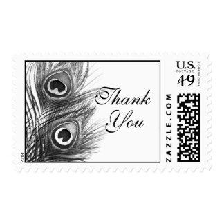 La pluma blanco y negro del pavo real le agradece sellos
