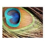 La pluma del pavo real diseña la postal