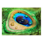 La pluma macra abstracta del pavo real cae la tarjetas de visita grandes