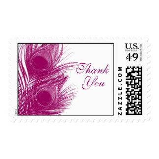 La pluma púrpura del pavo real le agradece sellar envio