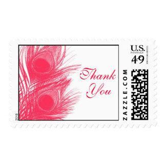 La pluma rosada del pavo real le agradece sellar sello