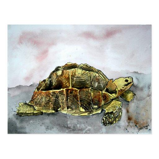 la postal africana de la tortuga carda la tortuga
