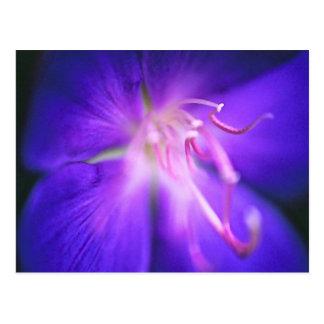 La postal de la flor