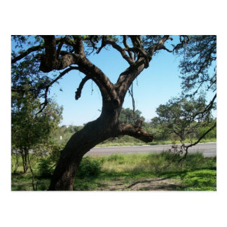 La postal del árbol del palo