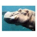 La postal del hipopótamo