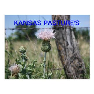 La postal del PASTO de KANSAS
