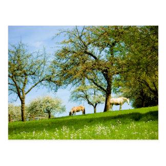 La postal del prado