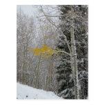 La postal pasada de Aspen