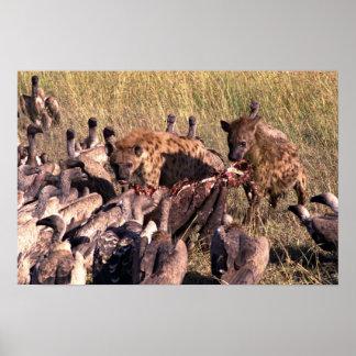 La presa del Hyena con los buitres Póster
