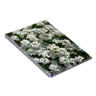 La primavera blanca bonita florece el cuaderno esp