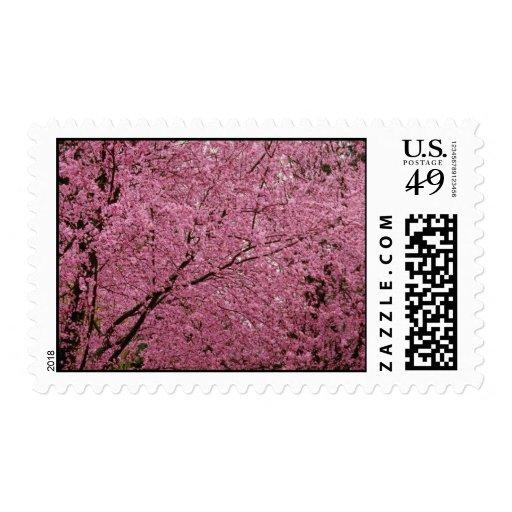 La primavera brillante roja florece en árboles de sello