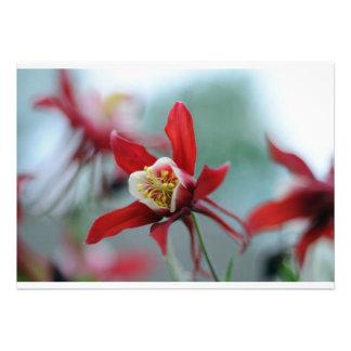 La primavera florece Columbine