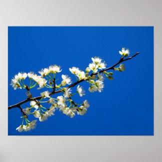La primavera florece el poster del arte de la foto