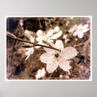 """La """"primavera florece"""" el poster por el mDarkPoet"""