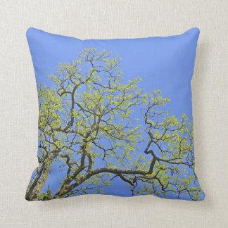 La primavera florece en árbol contra la almohada d