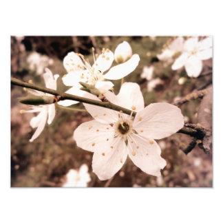"La ""primavera florece"" la impresión de encargo 14  foto"