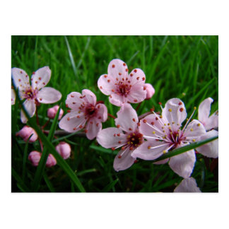 La primavera florece la POSTAL de 4 POSTALES