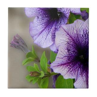 La primavera hermosa florece púrpura azulejo cuadrado pequeño