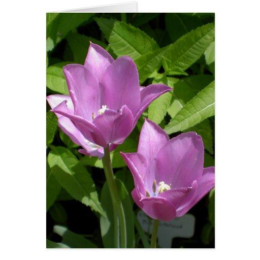 La primavera púrpura florece la tarjeta sin fronte