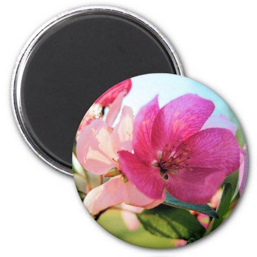 La primavera rosada florece imán
