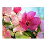 La primavera rosada florece postal