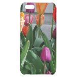 La primavera significa tulipanes