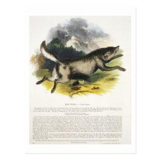La PU educativa del ejemplo del lobo (lupus de Tarjetas Postales