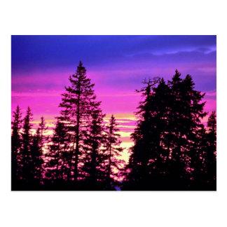 La puesta del sol cerca del cedro rompe el monumen postales