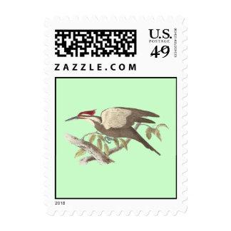 La pulsación de corriente con cresta(pileatus del sello