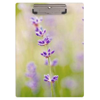 la púrpura bonita florece calmar natual de la