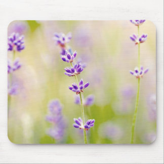la púrpura bonita florece calmar natual de la alfombrilla de raton