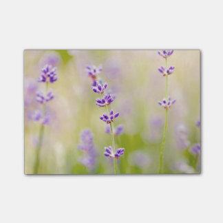 la púrpura bonita florece calmar natual de la notas post-it®