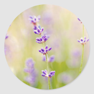 la púrpura bonita florece calmar natual de la pegatina redonda