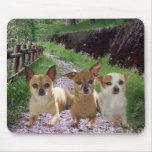 La púrpura de la chihuahua florece Mousepad Alfombrilla De Ratón
