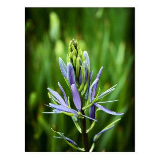 La púrpura del color postal