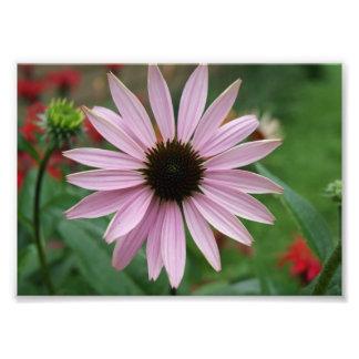 La púrpura deslumbra la impresión fotográfica 5x7 fotografía