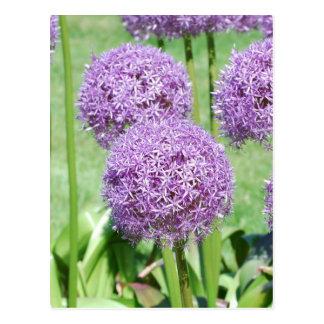 La púrpura florece la postal